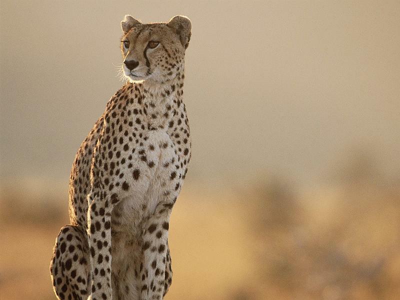 【动物大迁徙】肯尼亚内罗毕+马赛马拉5晚7日度假-八